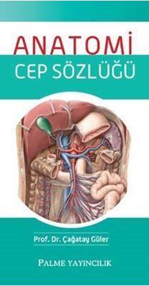 Resim Anatomi Cep Sözlüğü